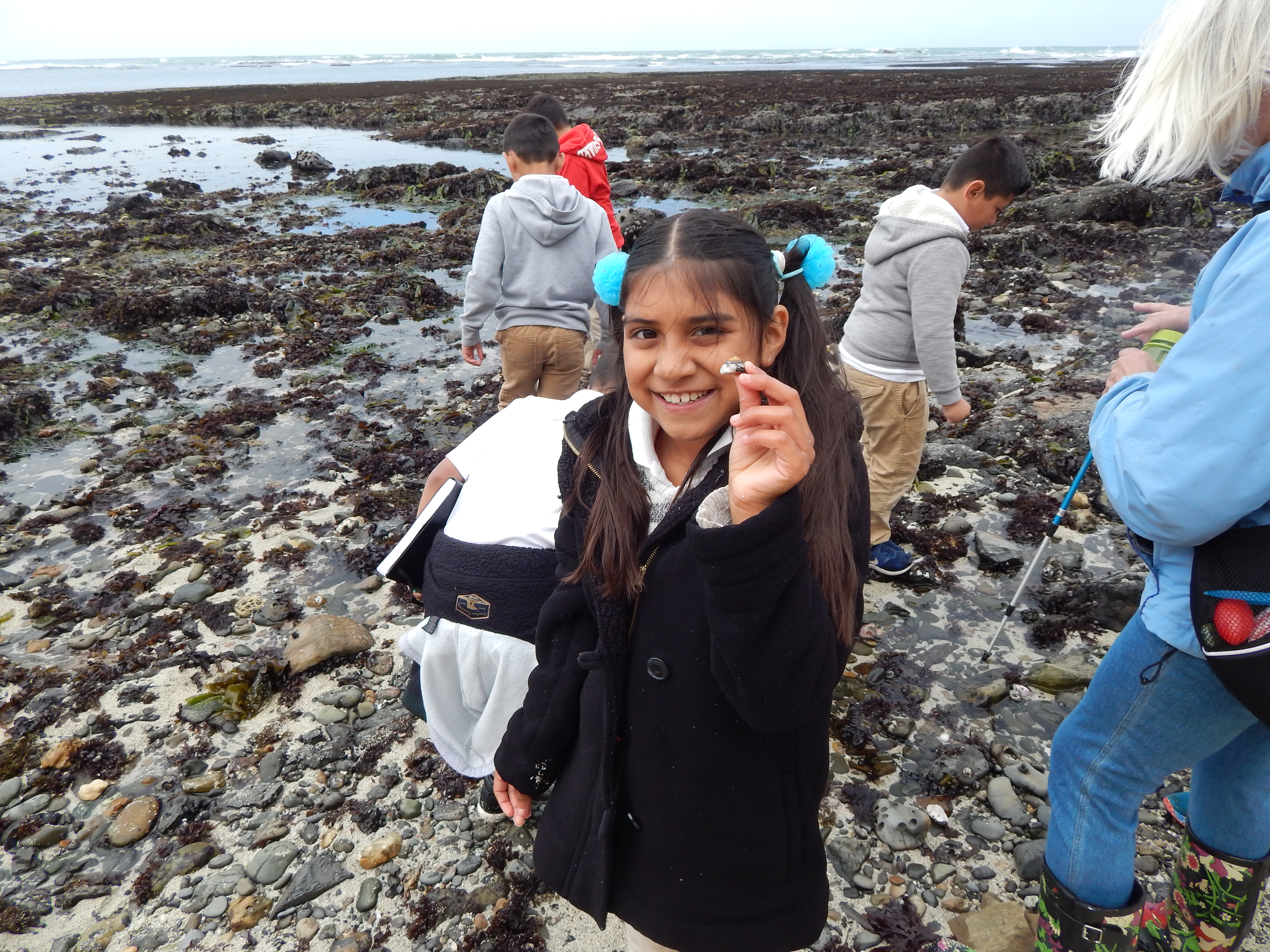 ENVIRONMENTAL VOLUNTEERS: Since forming in 1972,Environmental Volunteershas helped more than 400,000children and adults explore natural science as part of the group'smission tobuild awareness of the San Francisco Bay ecosystem. Weekly file photo.