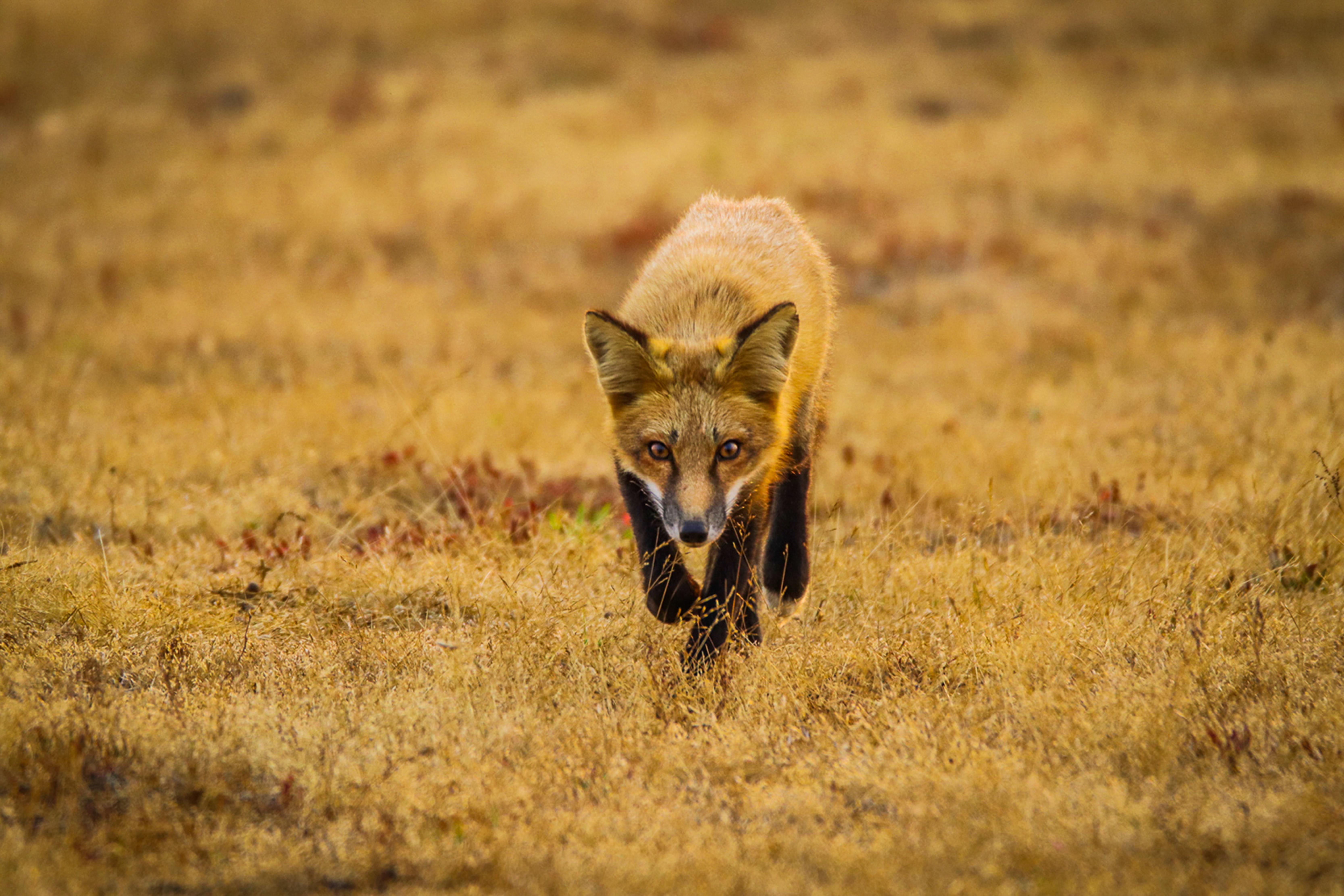 foxtrotseb-1559754641-60.jpg
