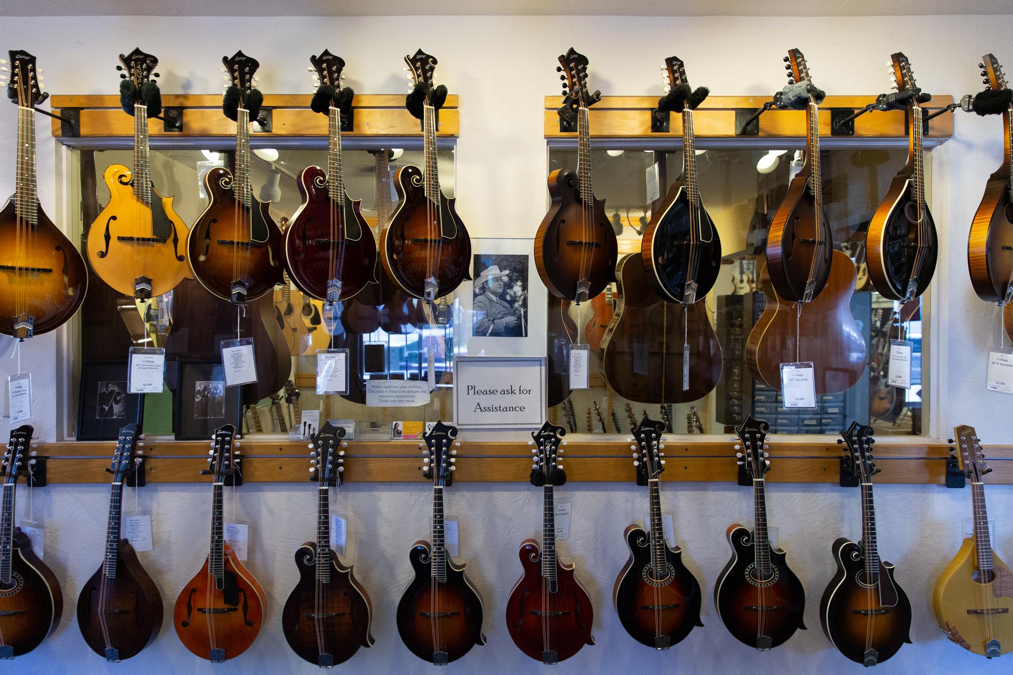 Mandolins for sale at Gryphon Stringed Instruments.