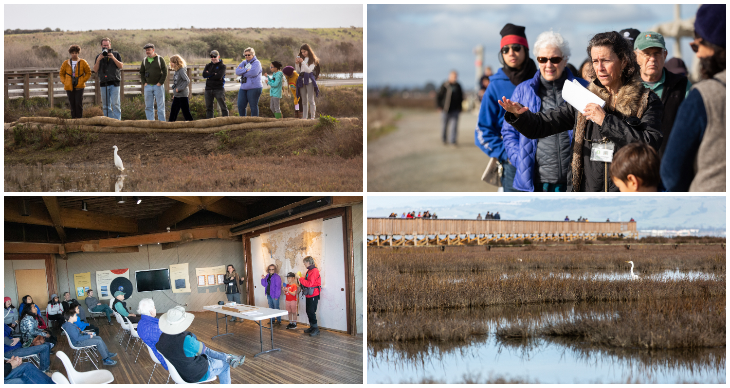 Clockwise from topleft: Bird enthusiasts watch a snowy egret during a king tide; Palo Alto naturalist Connie DeBra leads a guided tour of king tides; A great egret wades in thetide looking for water crustaceans to snack on; DeBra explains why king tides occur with help from volunteers.