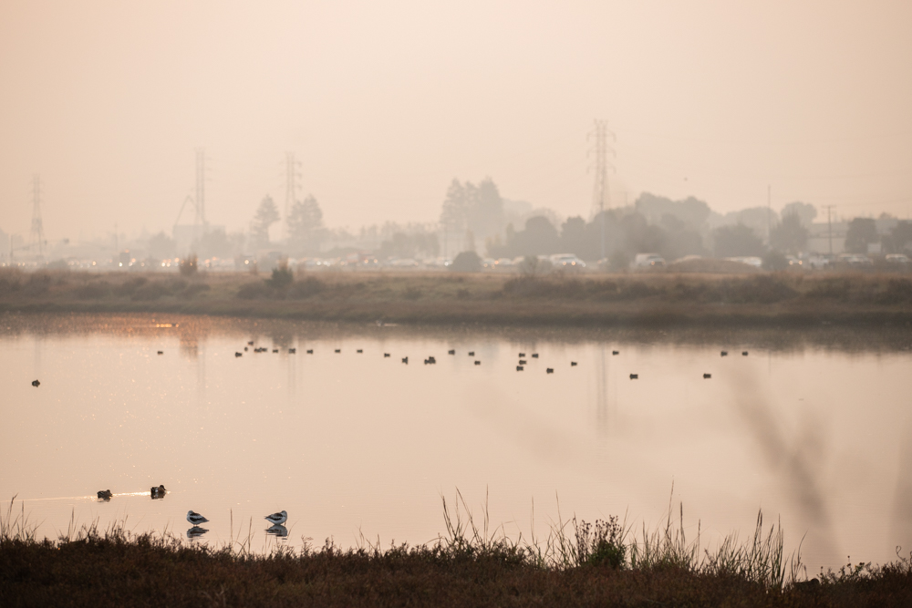 During the Camp Fire in November last year, a hazy sunrise obscured traffic alongsidea pond at Menlo Park's Bedwell Bayfront Park. At that time, the air quality, due to wildfire smoke in the region, was rated as some of the worst in the world. (Photo by Magali Gauthier.)