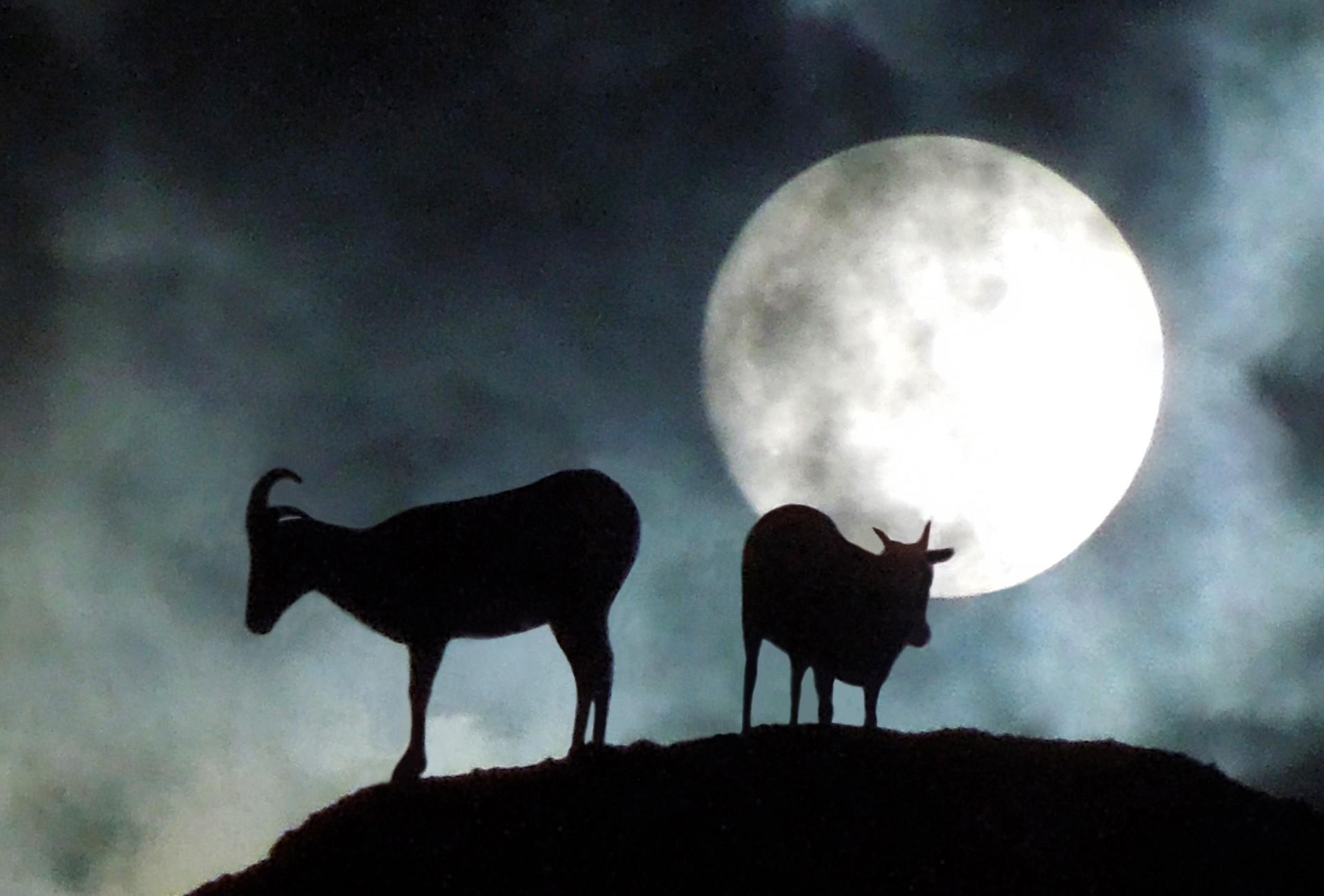 "Adult winner: ""Desert Bighorns,Papago Butte, Arizona"" byRobert Eugene Johnson"