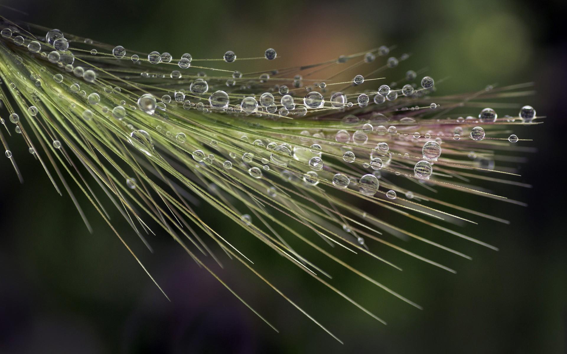 "Natural World:""Fog Dew"" by Melissa Brookmire"