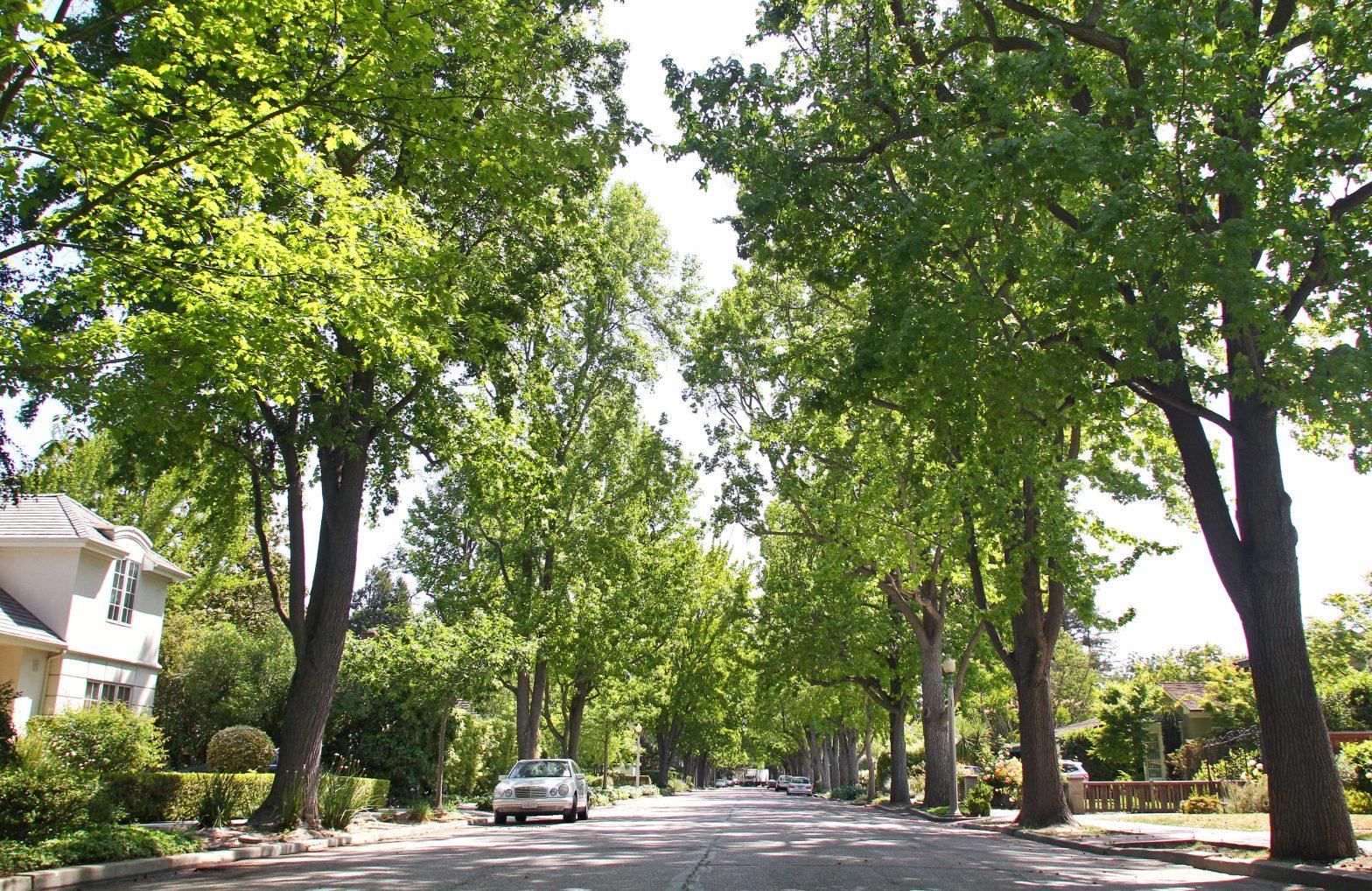 trees-1570742562-70.jpg